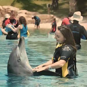 Дельфины 5