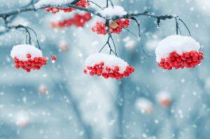 Зима40