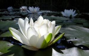 cvety-kuvshinki