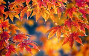 Autumn_Foliage_446595