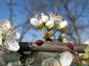 Весна 84