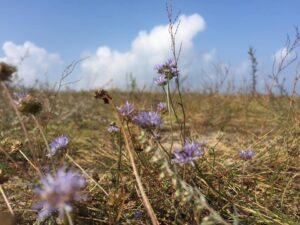 цветы на дюне