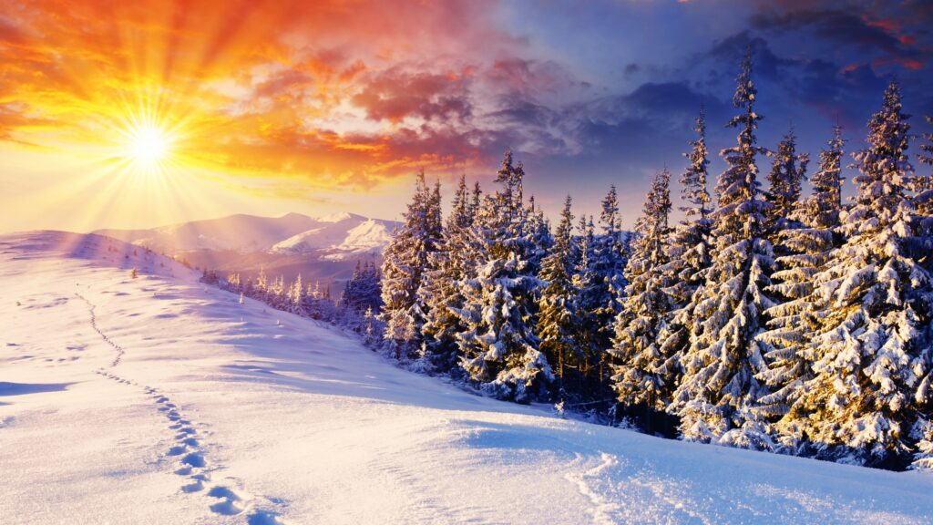Sunrises_and_sunsets_Winter_Scenery_Snow_Spruce_574561_2560x1440